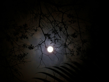 lua na casa do bosque entre folhas